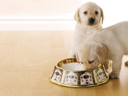 Gold dog bowl