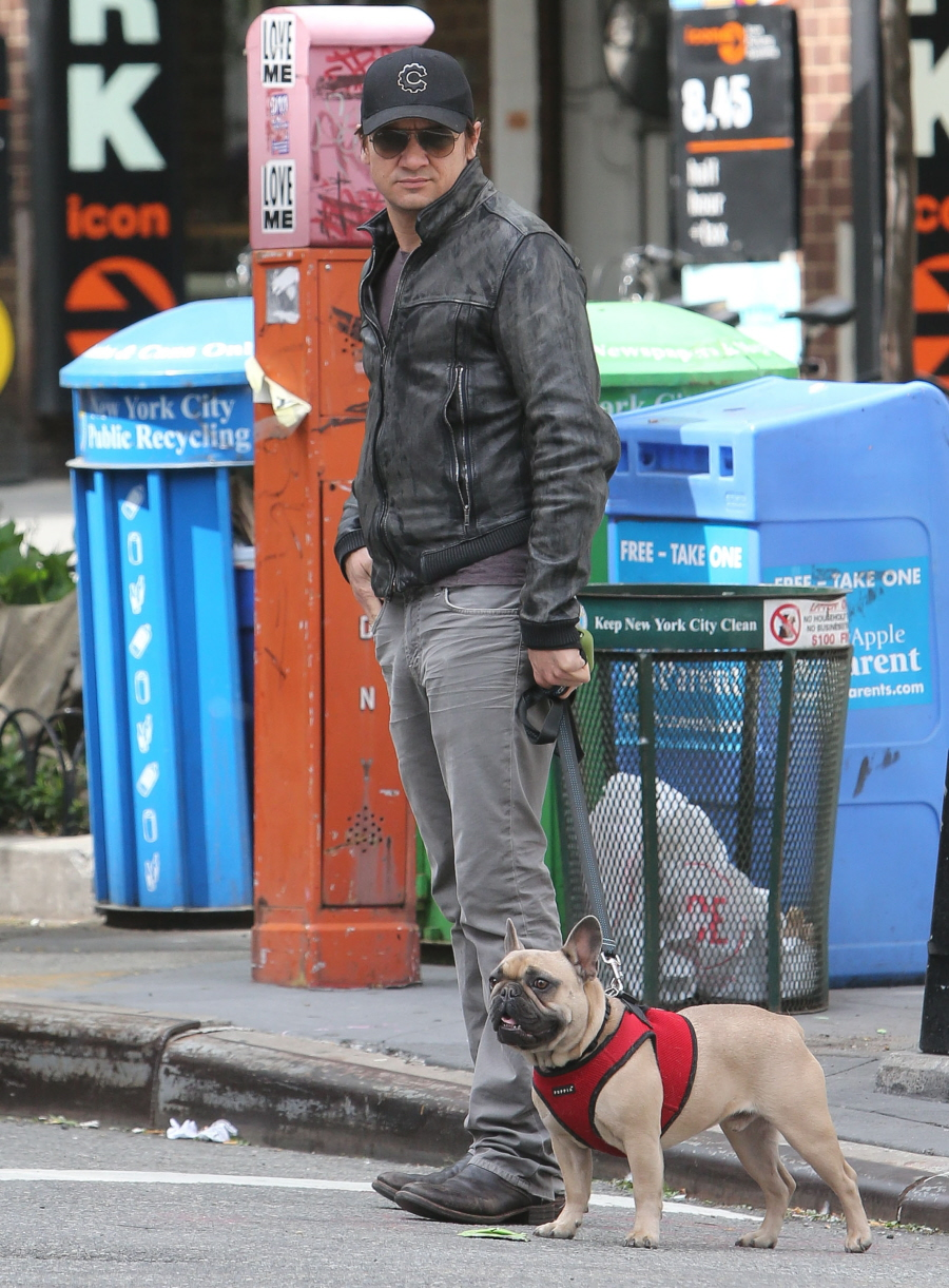 Jeremy Renner and his bulldog, Henri