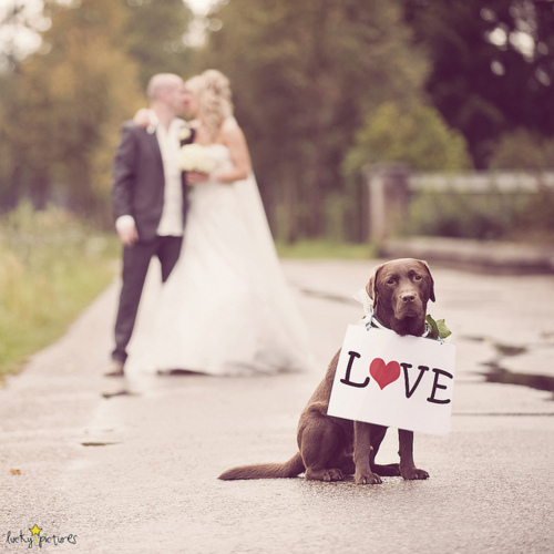 chocolate lab dog in wedding with love sign