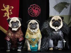 pugs of westeros