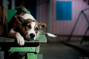 Dog on a bench - stop animal cruelty