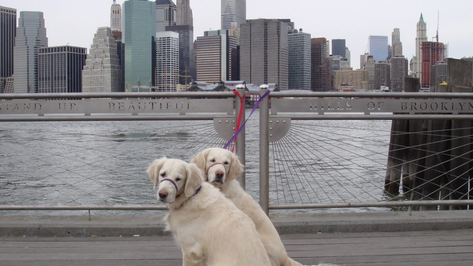 Brooklyn skyline dogs - dog friendly cities