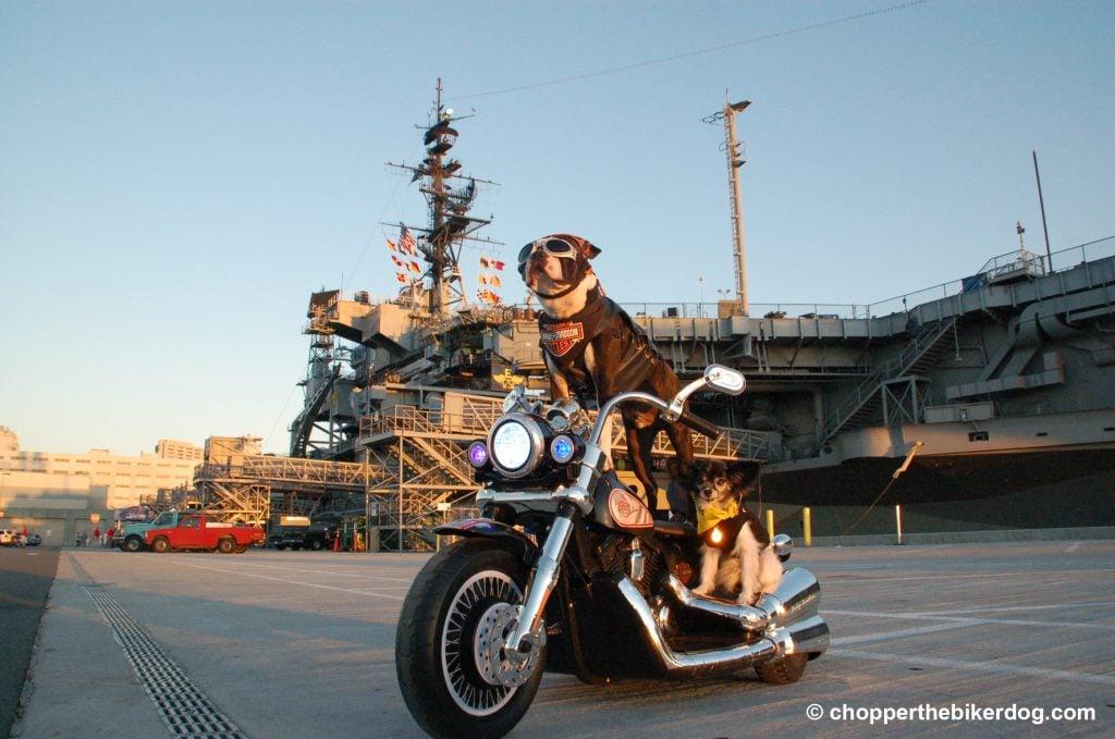 Chopper at the USS Midway - Chopper the Biker Dog