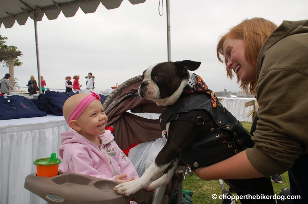 Chopper with cancer patient girl - Chopper the Biker Dog