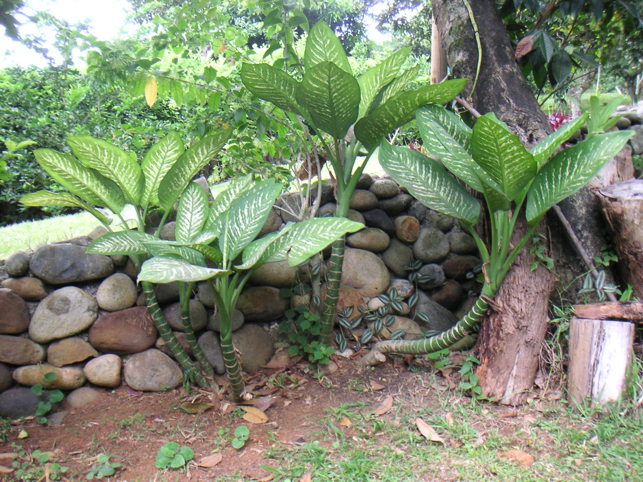 The 11 most poisonous plants for dogs rover for Matas de jardin