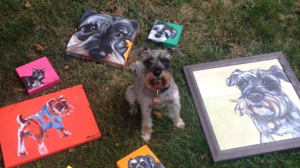 Schnauzer portrait - dog portrait