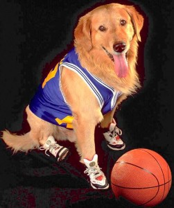 Air Bud - celebrity dog