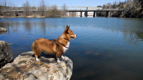 Austin TX Corgi - Dog friendly cities
