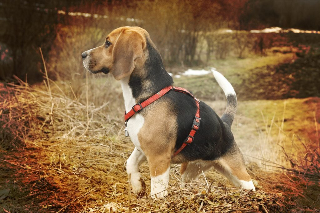The 50 Best Hunting Dog Names of 2018 for Male and Female Dogs