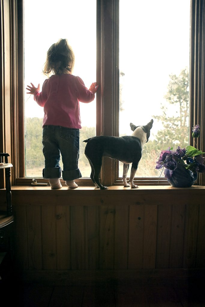 Boston terrier with a child - terrier personality