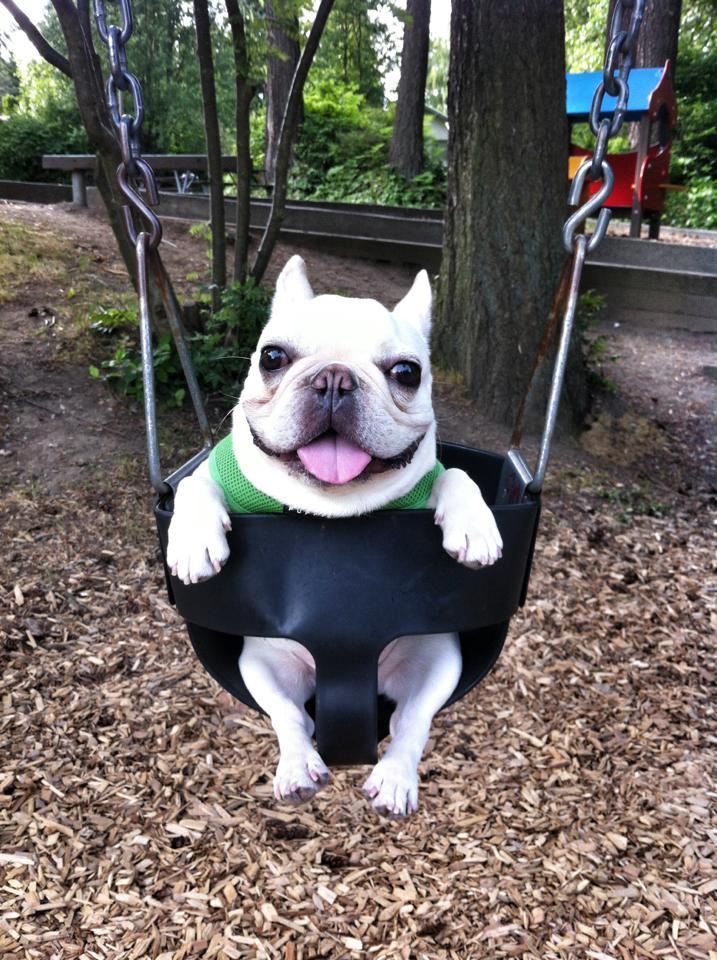 Bulldog swinging