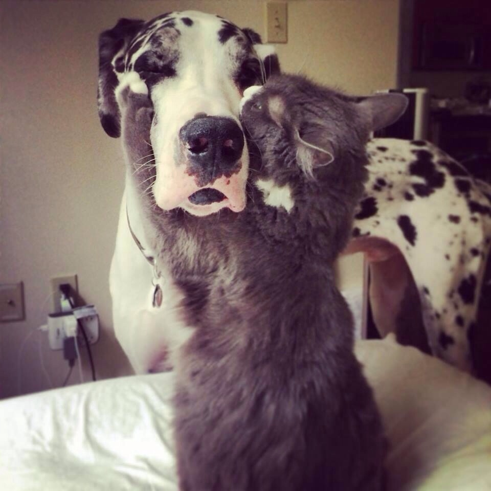 Squishy Cat Imgur : 15 Surprising Dog Friendships Rover Blog