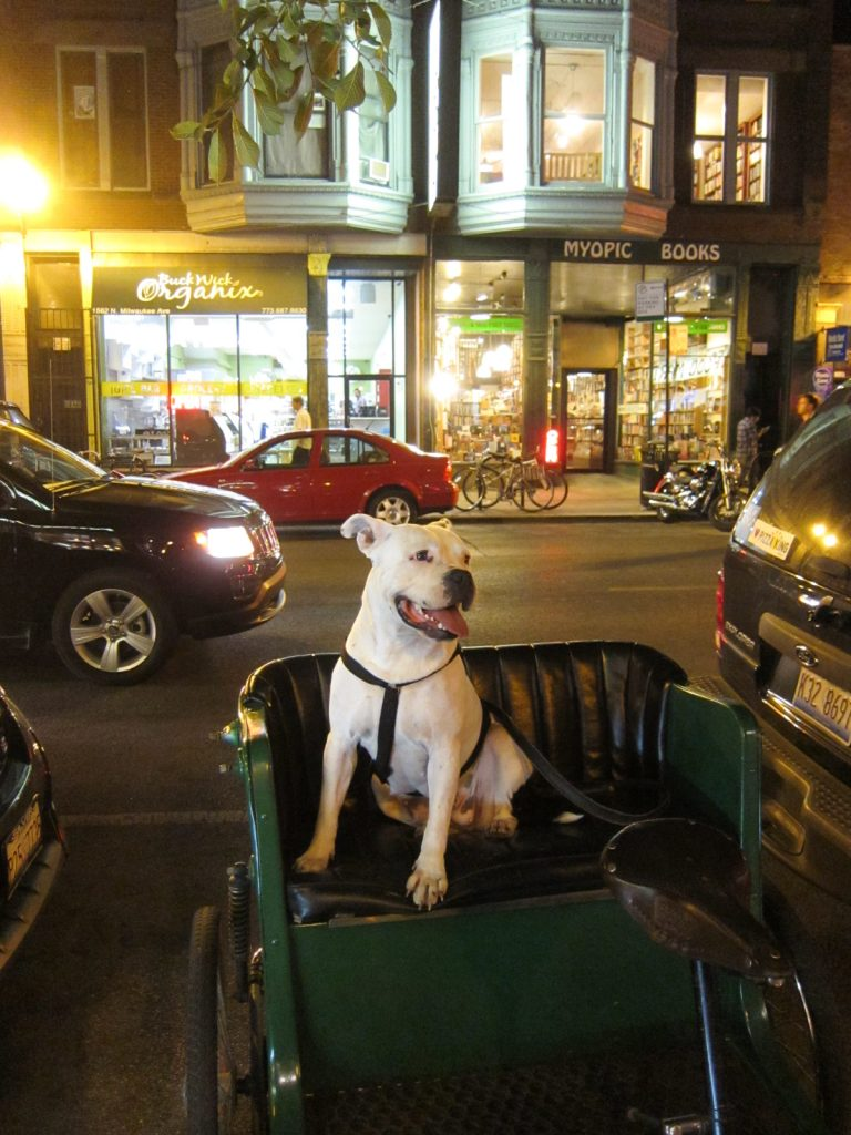Chicago dog - dog friendly cities