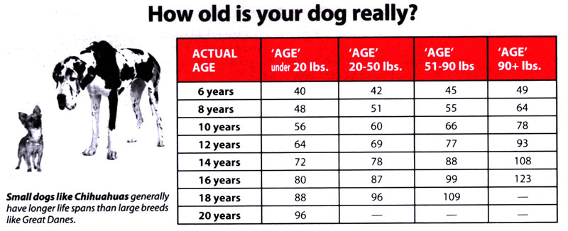 Dog Myths - Age Chart