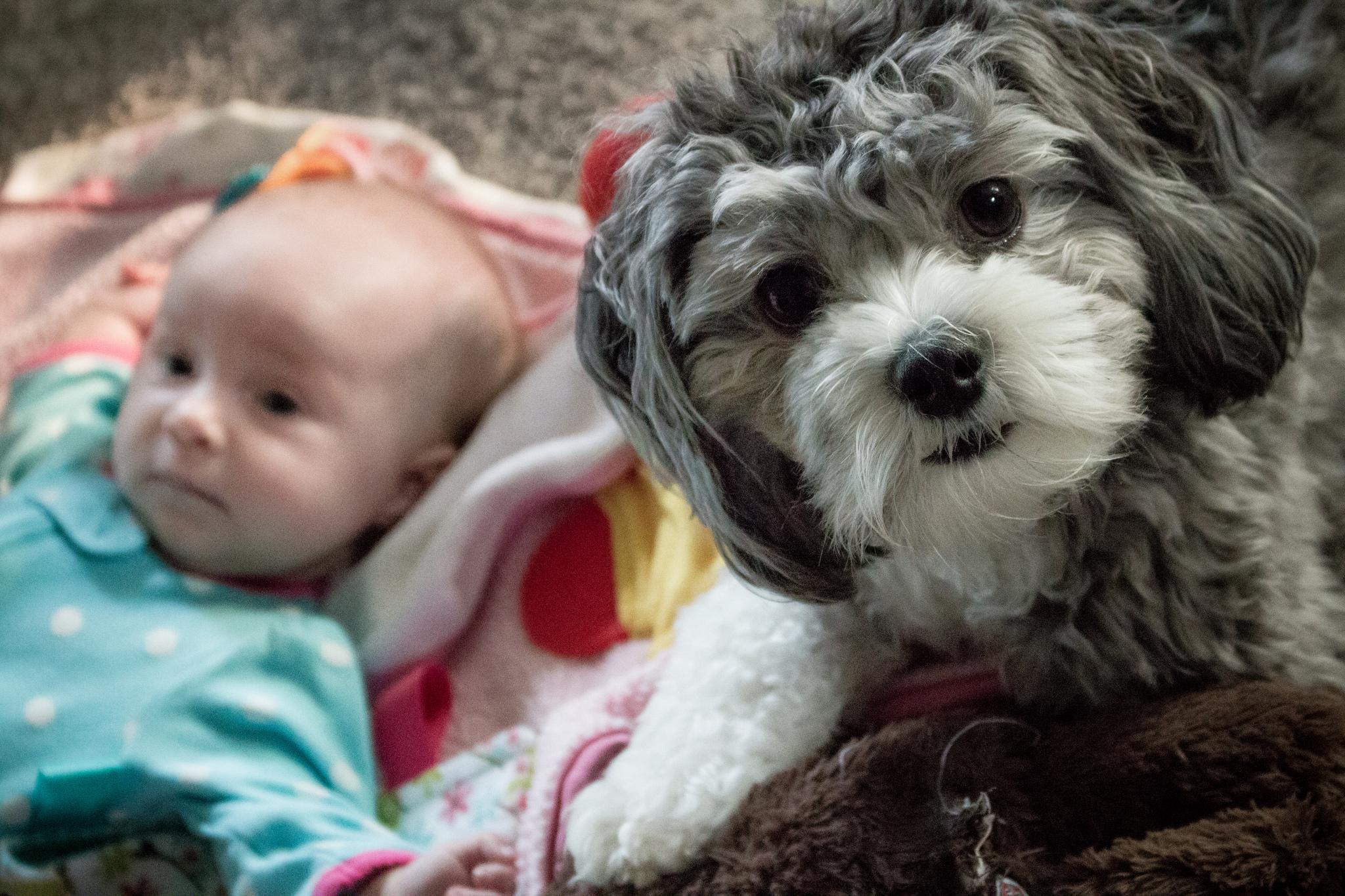 Dog or baby quiz