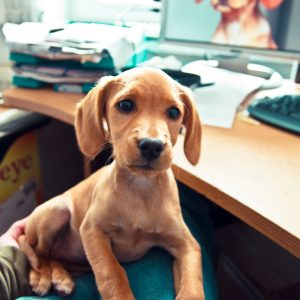 Dog at desk - apps for dog lovers