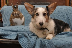 Bunny and dog