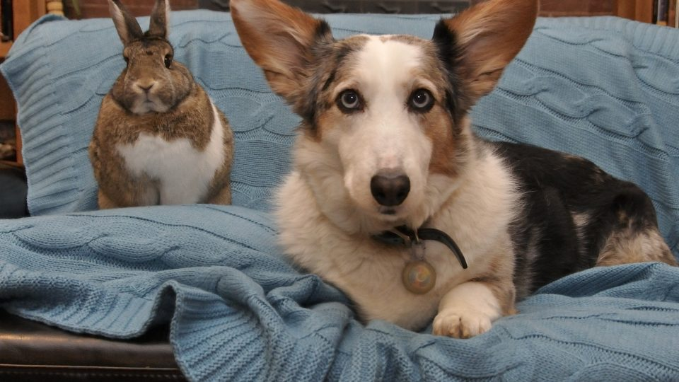 Bunny dog friendship