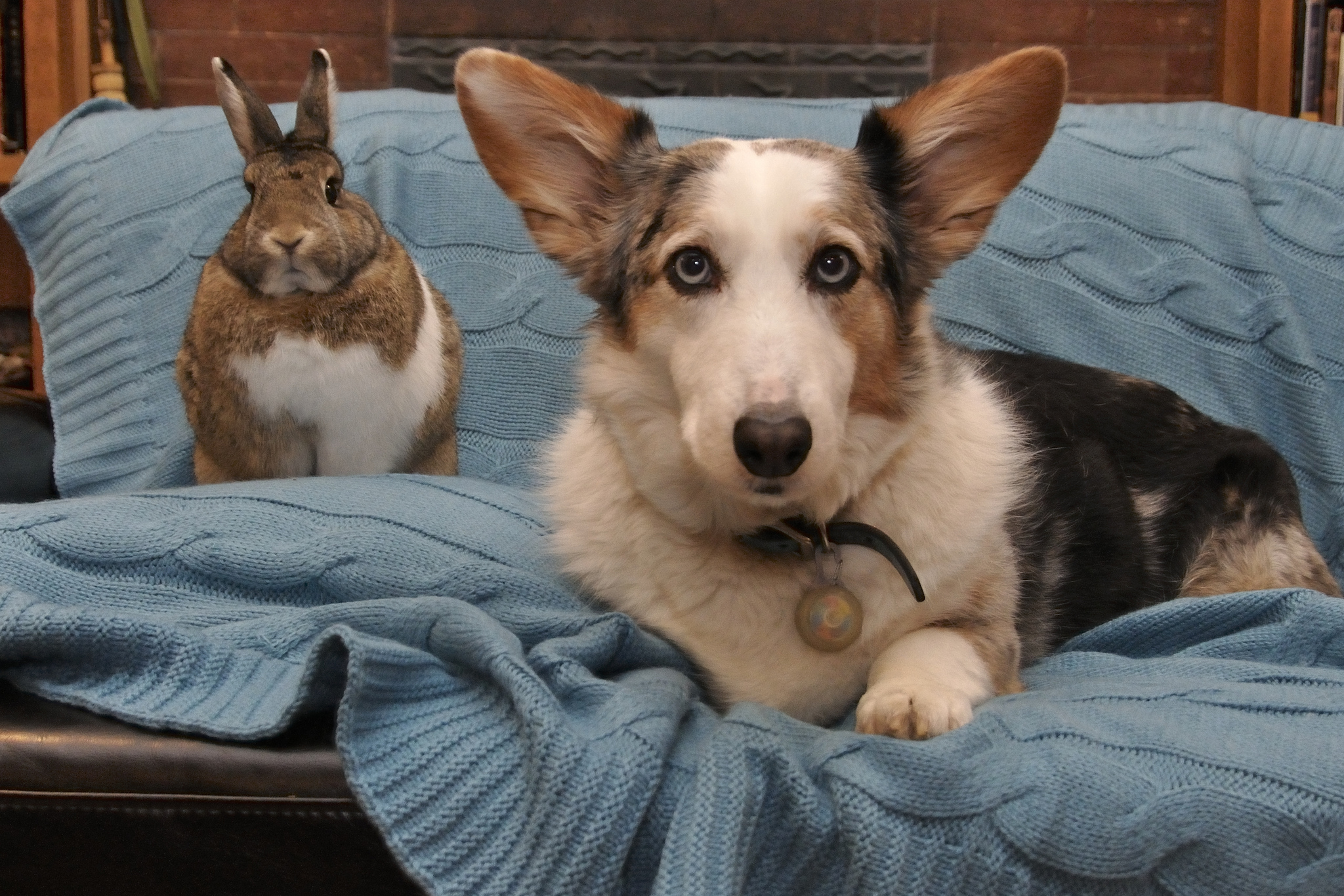 Nothing Is Cuter Than These Dogs Playing With Bunnies The Dog