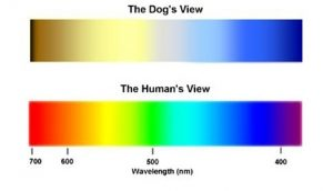 dog-myths-color-vision