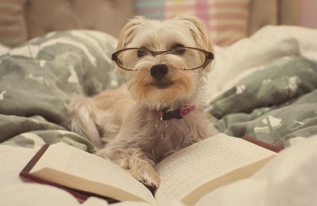 dog-doing-homework