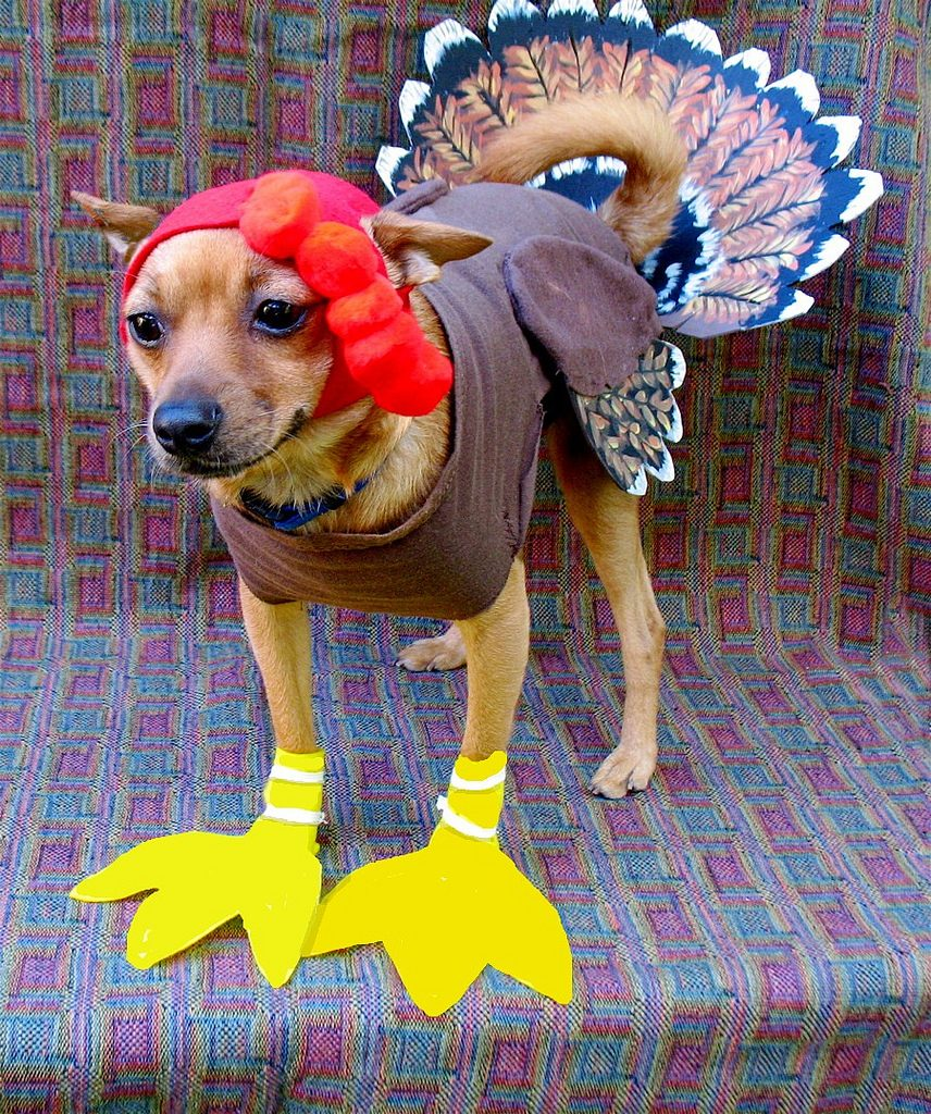 Dog in turkey costume - healthy homemade dog food