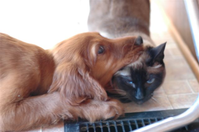 Kitten and dog friendship