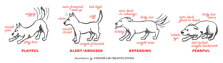 Dog myths body language