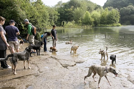 Dog Parks With Swimming Areas