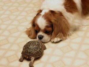 dog-turtle-friendship