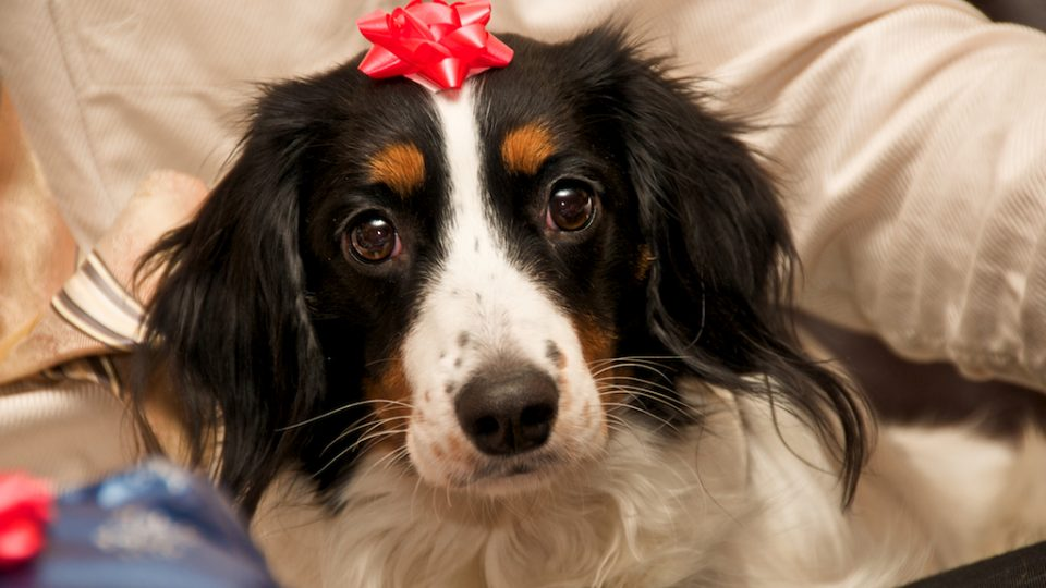Dog with bow - gifts for dog owners