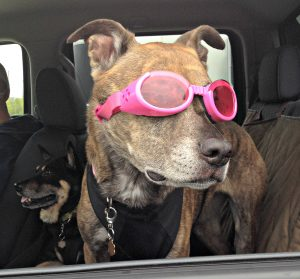 Doggles - dog road trip
