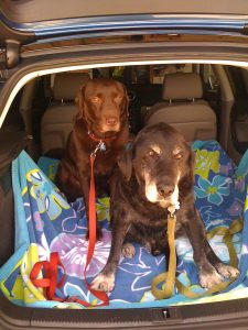 Dogs in a car - dog road trip