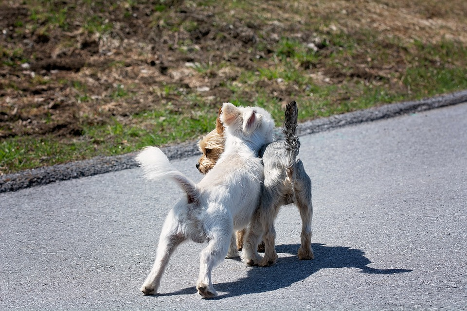 Two dogs sniffing each other