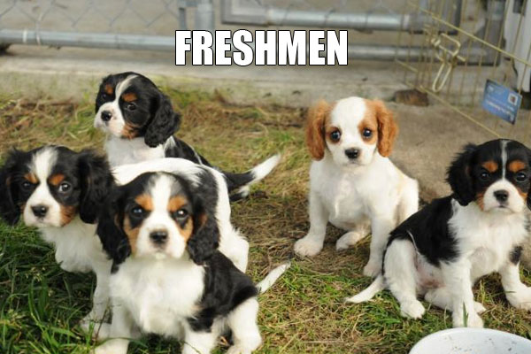 freshmen get younger  every year