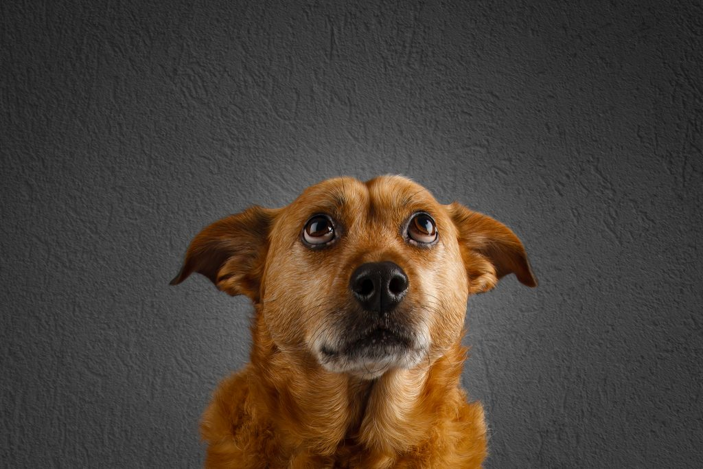 Mutt - what does my dog say about me?
