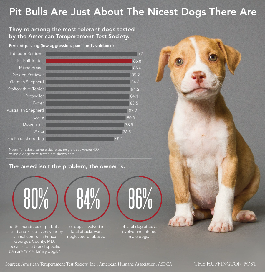 Pit bull awareness infographic