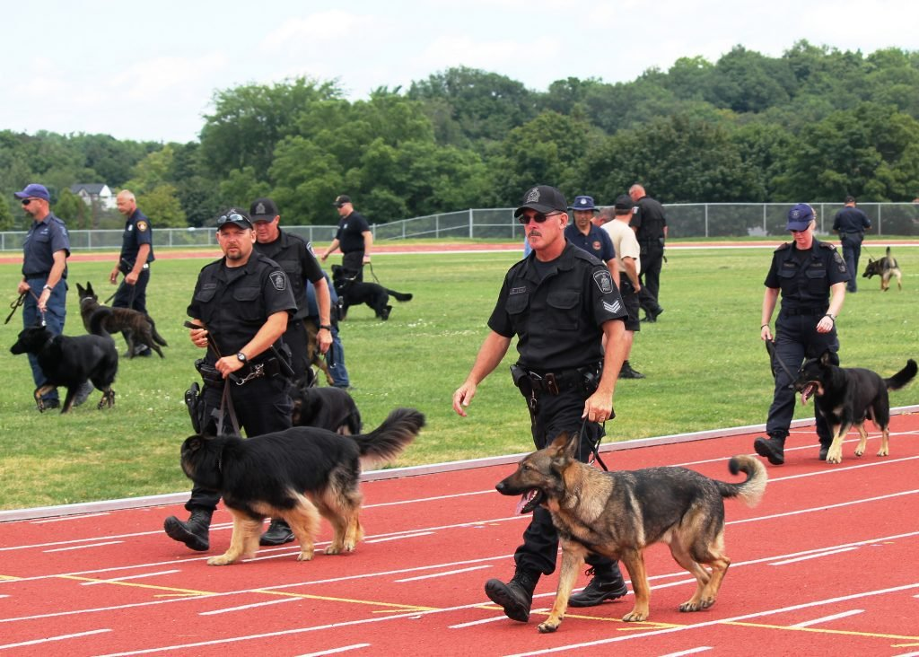 Police officer, canine unit - jobs with dogs