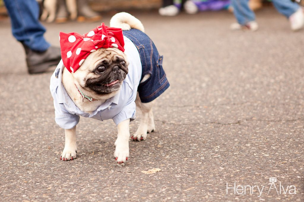 Portland dog in bandana - dog friendly cities