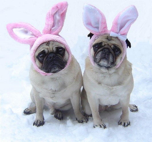 Pugs in bunny ears - what does my dog say about me?
