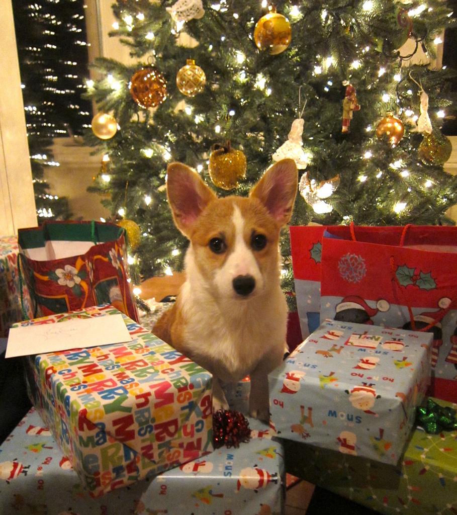 SURPRISE! A puppy! —Flickr/Steve Jurvetson