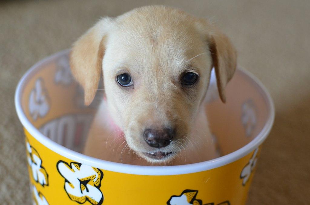 Puppy in popcorn - list of dog movies