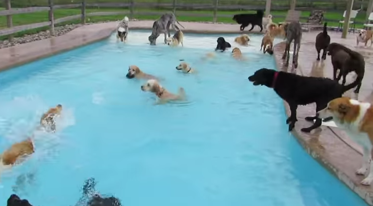 Puppy pool party - dog pool party