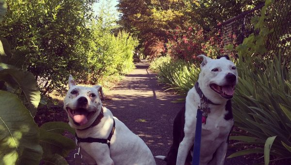 True Story: The Highs and Lows of Loving a Pit Bull