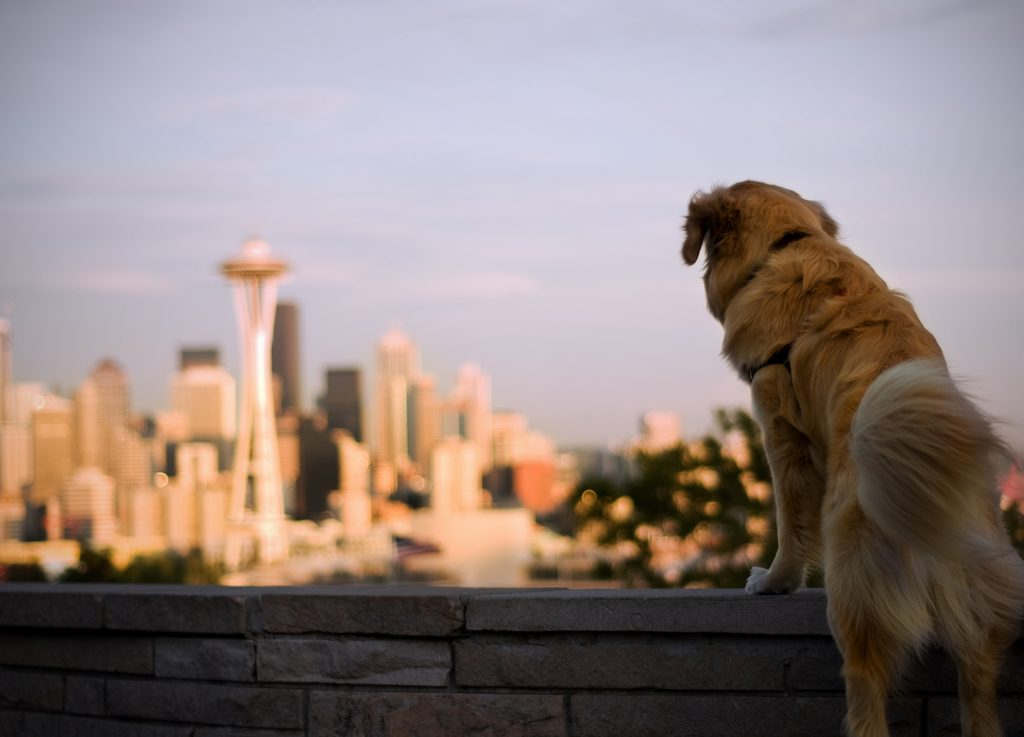 Seattle dog - dog friendly cities