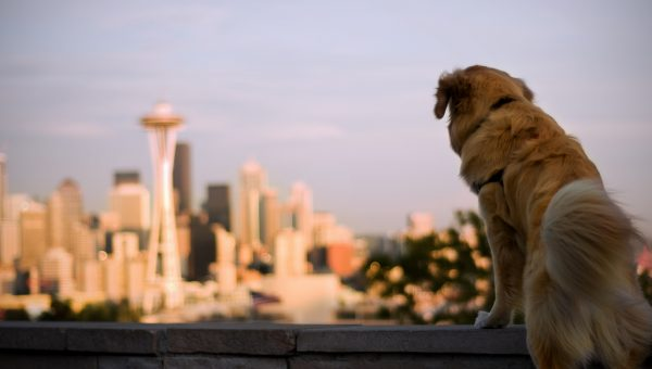 Do You Live in One of America's Most Dog-Friendly Cities?