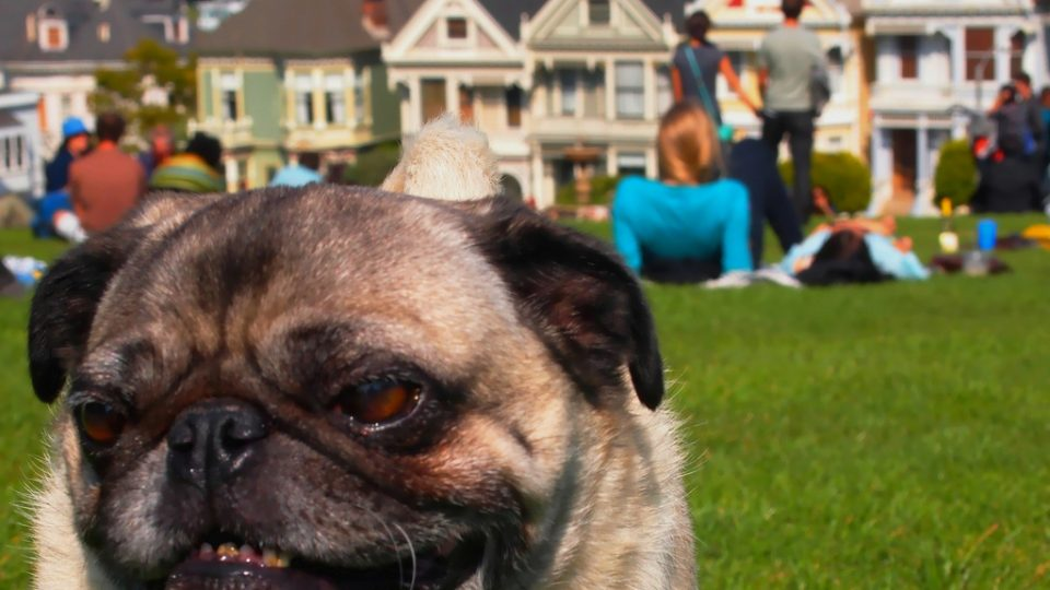 San Francisco dog