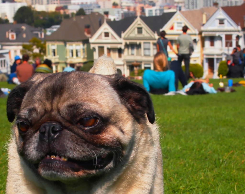 The Ultimate Guide To Dog Friendly Restaurants In San