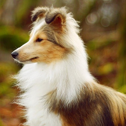 The top 10 smartest dog breeds for Types of dogs with photos