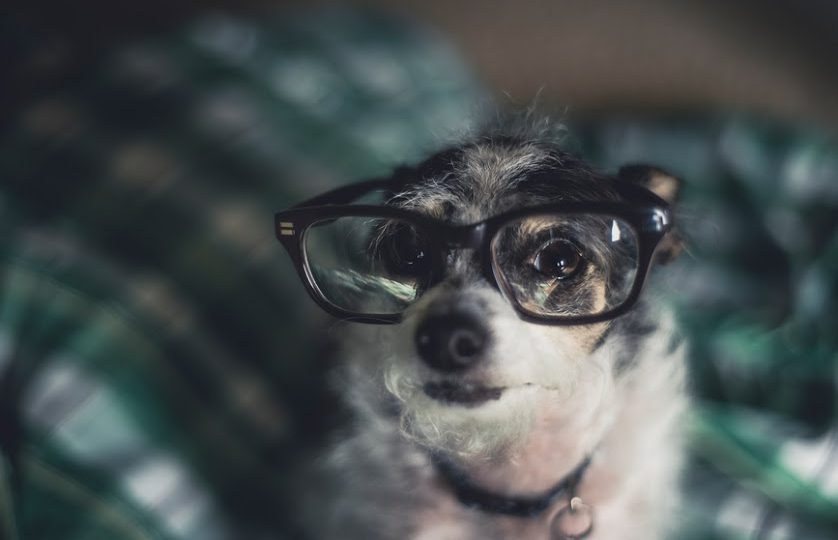 Dog in glasses - dog myths
